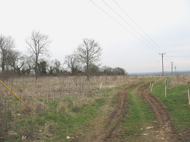 Young trees near Woodperry Road