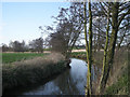 SP1564 : The River Alne in early spring by Row17