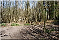 TQ7636 : High Weald Landscape Trail, Angley Wood (2) by Nigel Chadwick