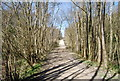 TQ7636 : High Weald Landscape Trail, Angley Wood (4) by N Chadwick
