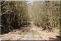 TQ7536 : High Weald Landscape Trail, Angley Wood (2) by N Chadwick