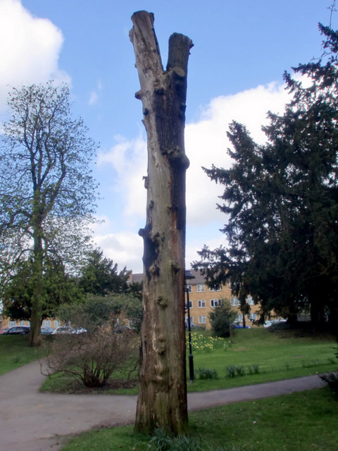 Tree, Oakmere Park, Potters Bar, Hertfordshire