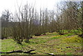 TQ7039 : Coppiced trees, High Weald Landscape Trail by N Chadwick