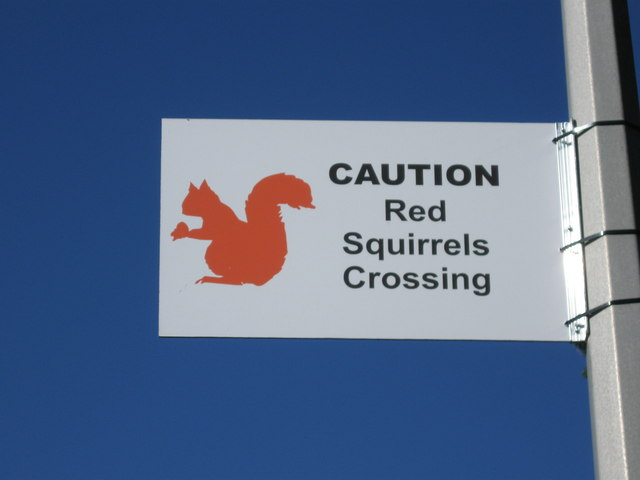 Red Squirrels Crossing, Darras Road