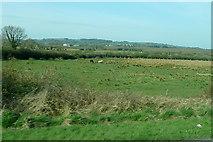 R7745 : Farmland at Mountcatherine by Graham Horn