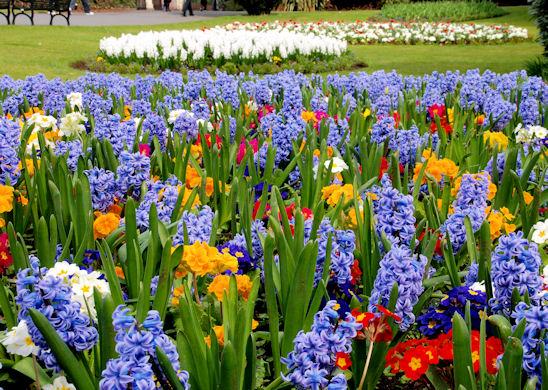 Spring Flower Beds Botanic Gardens 169 Albert Bridge