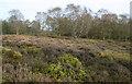 SJ4953 : Lowland heath on Bickerton Hill by Espresso Addict