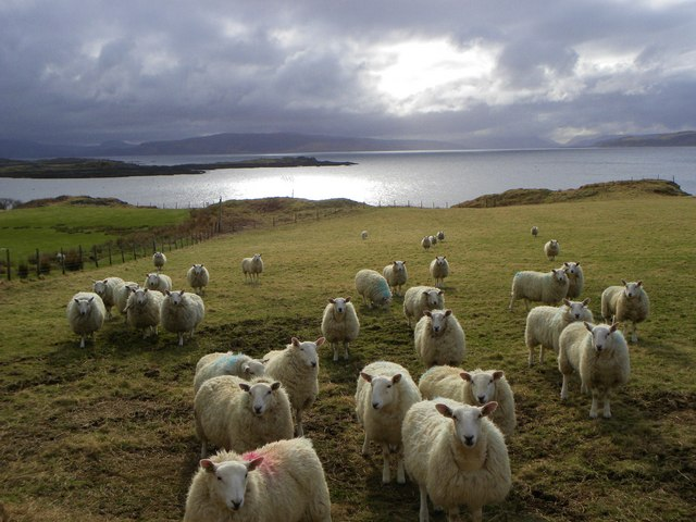 Local inhabitants, Ormsaigbeg