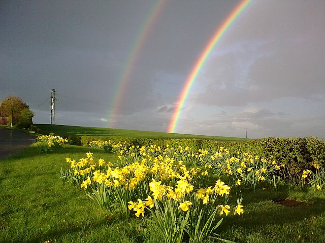 Springtime rainbow