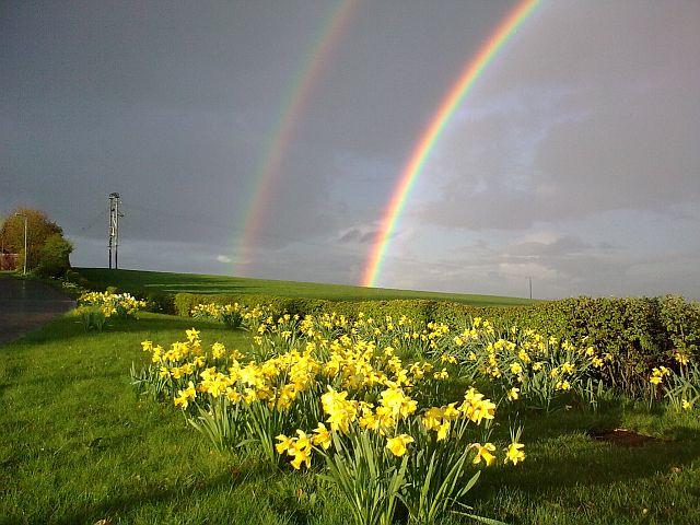 Springtime rainbow