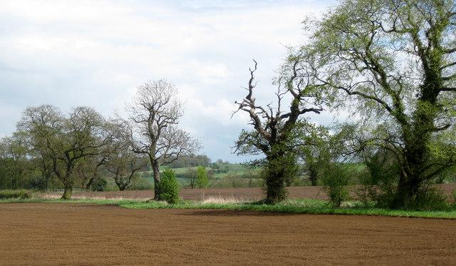 Near Grange Farm