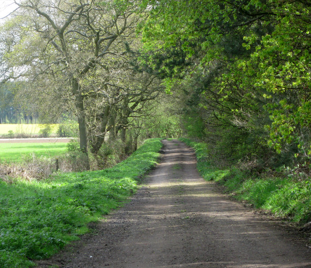 Byway by Broom Covert