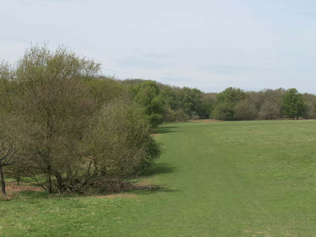 Coppiced access woodland on Northchurch Common