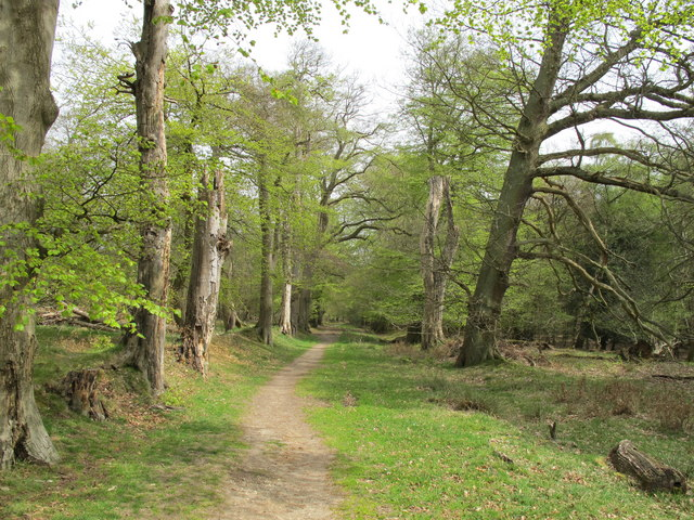 Thunderdell Wood