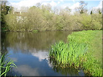 SU9890 : Chalfont St Peter: Layter's Green Pond by Nigel Cox