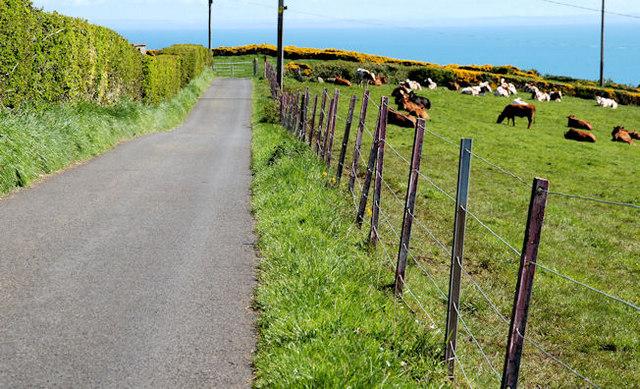 Path near the lighthouse, Whitehead (2)