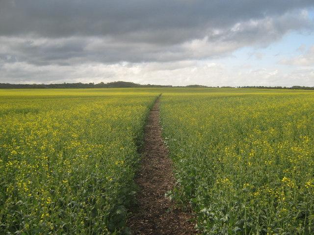 Footpath to Sillibourne Farm
