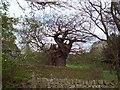 SE2406 : Broad Oak by Jonathan Clitheroe