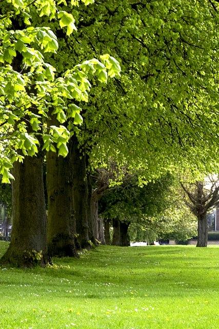 Village Trees