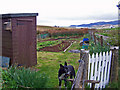 NG2845 : Roskhill allotment : Week 18