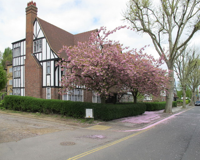 Block Of Flats With Cherry Blossom David Hawgood Geograph Britain And Ireland