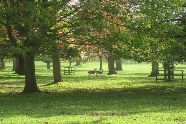 Deer, Houghton Hall