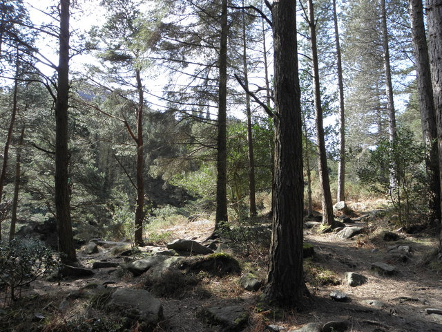 Donard Forest , Newcastle