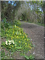 SW7829 : Spring flowers beside the footpath to Rosemerryn by Rod Allday