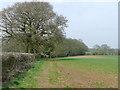 SO8187 : Staffordshire crop field near Enville by Roger  Kidd