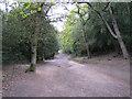 SP1097 : Nut Hurst Glade, Sutton Park by Robin Stott