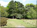 SP1096 : Edge of Lower Nut Hurst, Sutton Park by Robin Stott