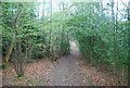 TQ2029 : Footpath, Alder Copse by N Chadwick