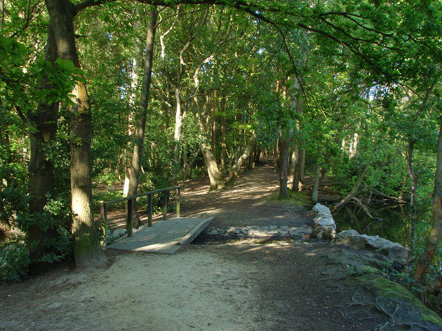 Lightwater Country Park Dog Walking