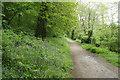 SX4268 : Calstock: path near Cothele Quay by Martin Bodman