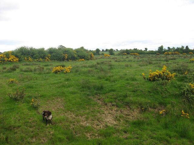 Field at Commons, Balscaddan, Co. Dublin