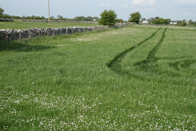 Meadow, County Galway
