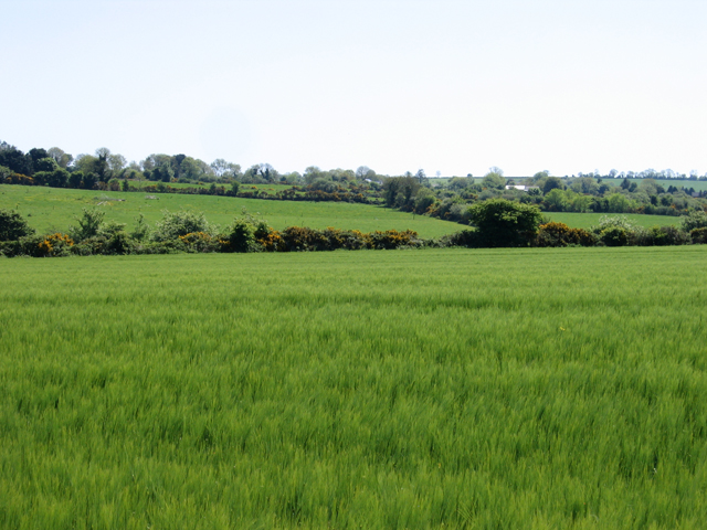 Barley field and landscape near Kilnamanagh Lower, Co. Wexford