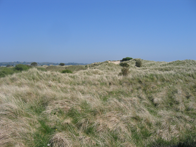 Atop the coastal dunes, Coolrainey, Co. Wexford