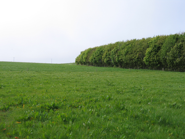 Grass ley and plantation on the Johnstown Castle farm, Co. Wexford