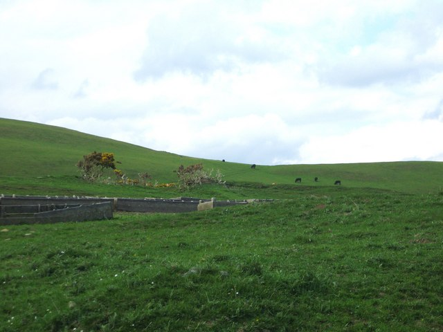 Cattle, grazing and feeding troughs