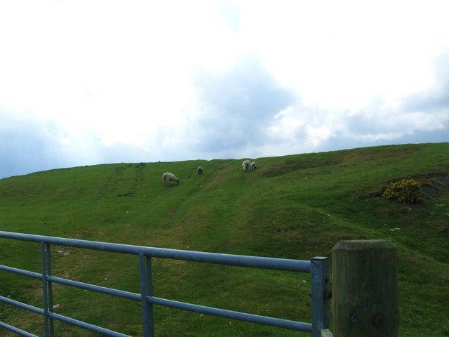 Grazing lands near Branxhome Easter Loch