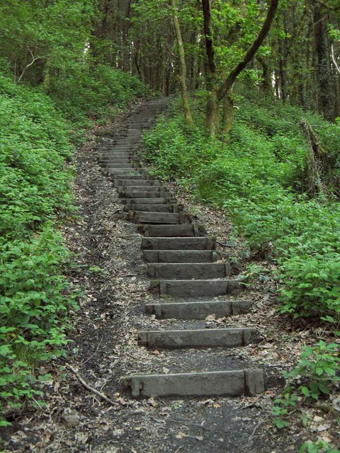 Image Result For Steps Of The