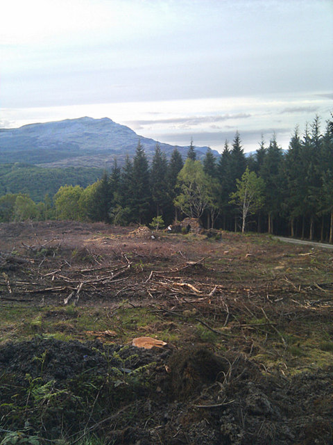 Deforested area revealing building remains