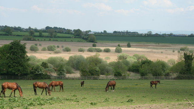 More Horses in County Kildare