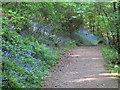 SW7827 : The footpath to Porth Sawsen by Rod Allday