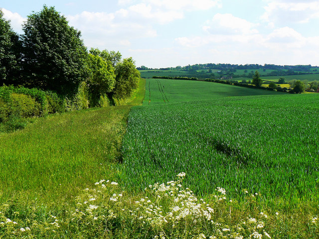 Wheat field, near the bridleway from Clifton Road, Clifton