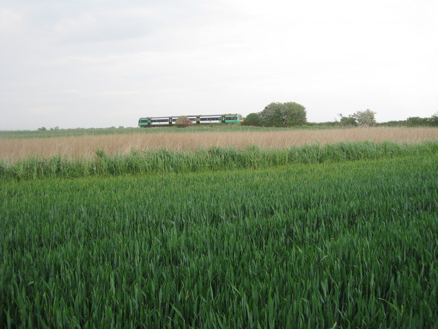 Crop Field on Kent and East Sussex Border