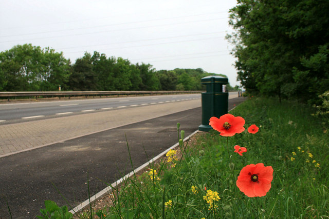 Poppies by the A34