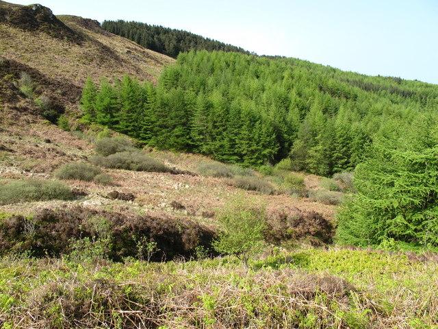Forest on Beinn Ghulean