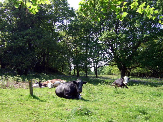 Woodland grazing